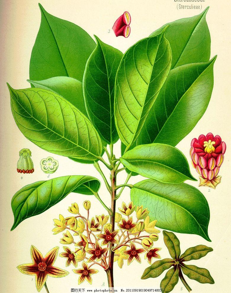 植物囹�a_植物图片