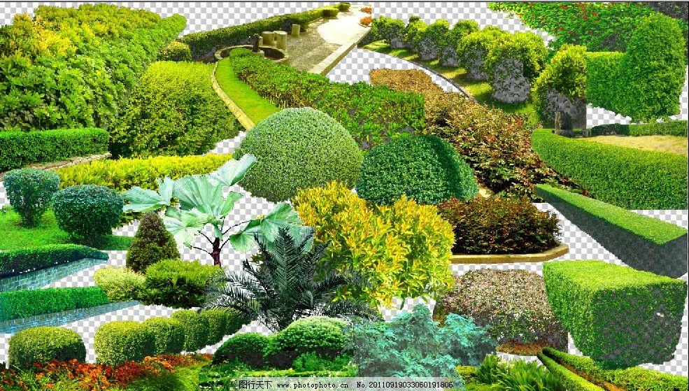 园林素材 花草树木 四季青 景观设计素材 小区景观设计素材 源文件