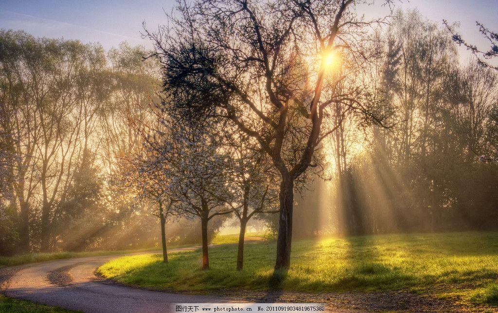 霞光 树木 绿地 草地 晚霞 晨光 阳光 光线 树林 自然风光 自然风景