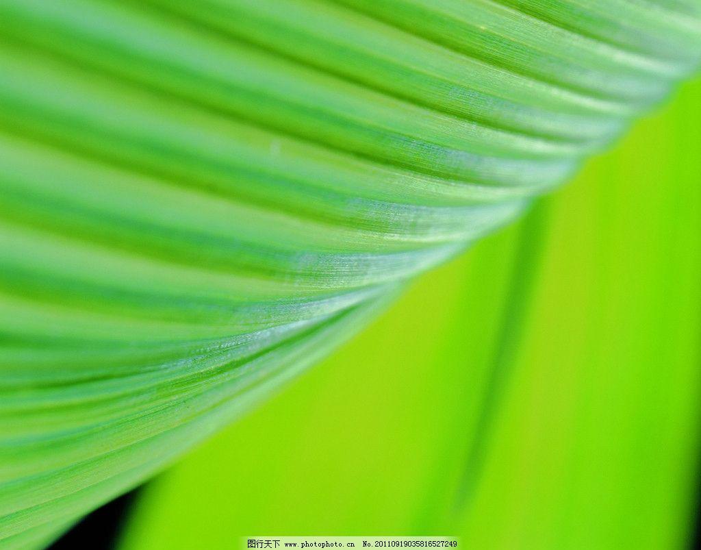 树叶纹理图片