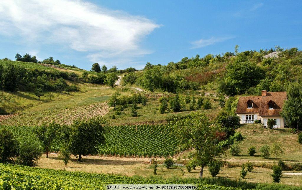 葡萄园 树 葡萄种植园 草地 蓝天 酿酒原料 葡萄庄园 图库 树木树叶