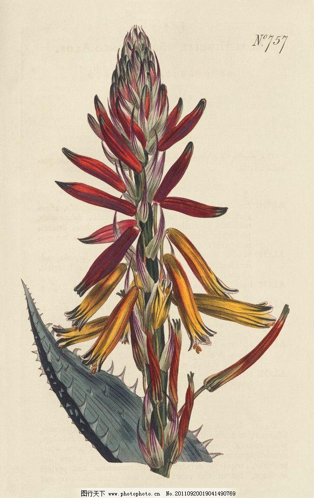 手绘花卉花朵背景 线描 仙人掌花 花纹 叶子 花卉底纹背景 绘画书法