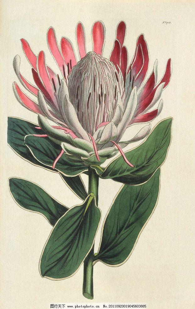 手绘花卉花朵背景 手绘 线描 花卉 花朵 花纹 叶子 花卉底纹背景 绘画
