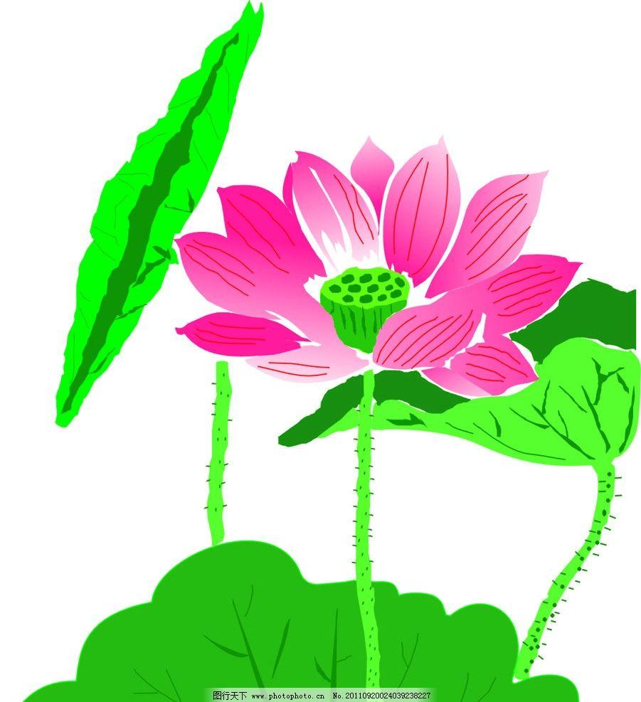 荷花 荷叶 绿色 莲藕 自然风景