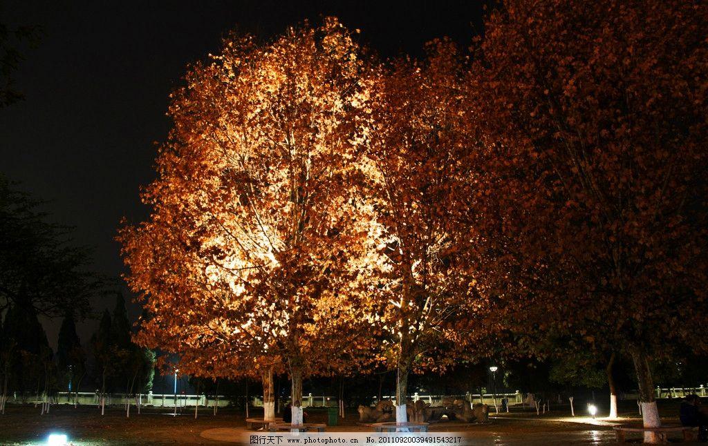 夜景树林图片_建筑摄影