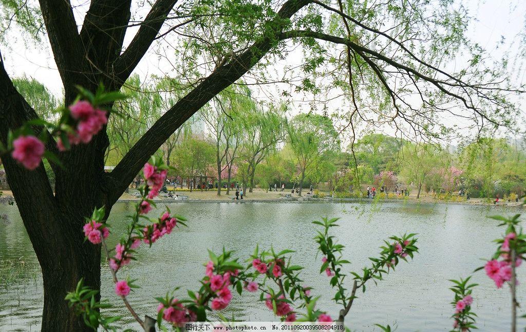 春水 柳树 绿树 桃树 桃花 红花 绿水 湖水 春天 天空 水岸 花架 花园