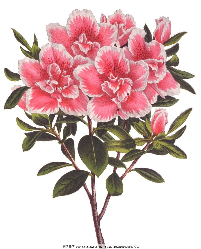 手绘花卉 手绘花纹花卉 植物 绿叶 手绘植物 绘画