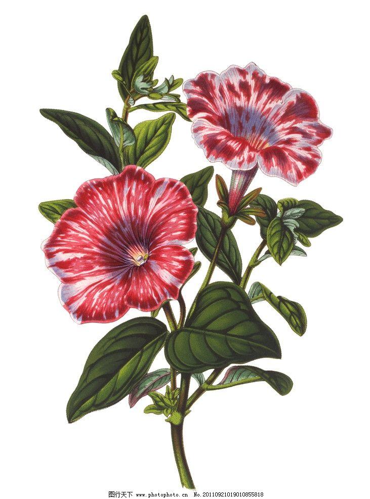 设计图库 动漫卡通 卡通动物  手绘喇叭花 喇叭花 手绘花卉 手绘花纹