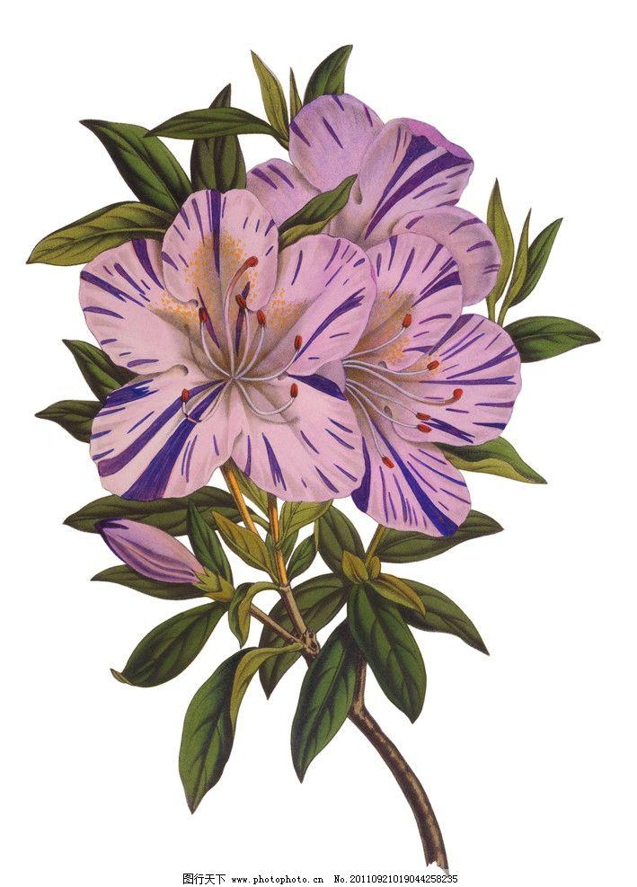 手绘花卉 手绘花纹花卉 植物 绿叶 植物标本 手绘植物 花卉 绘画 绘画