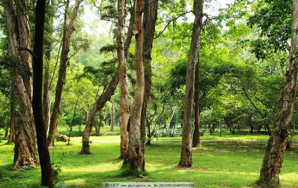 原始森林 森林 华南植物园 植物园 树木 自然风景 自然景观 摄影 72