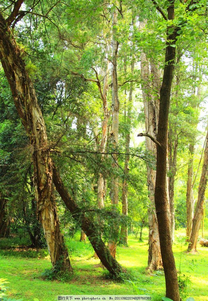原始森林 森林 华南植物园 植物园 树木 自然风景 自然景观 摄影 72dp