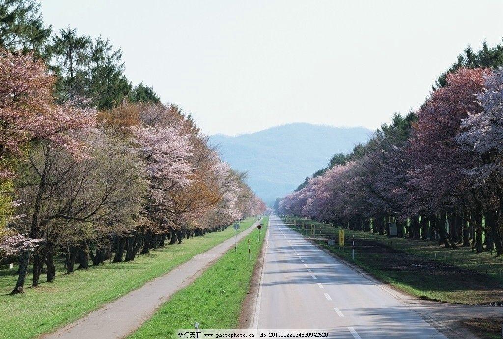 北海道/北海道春季美景图片