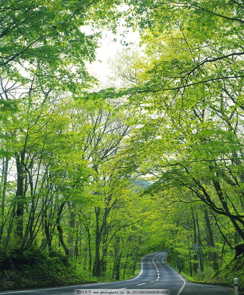 树木 树叶 森林 林间公路 绿叶 生物 树林 树木树叶 生物世界 餐饮