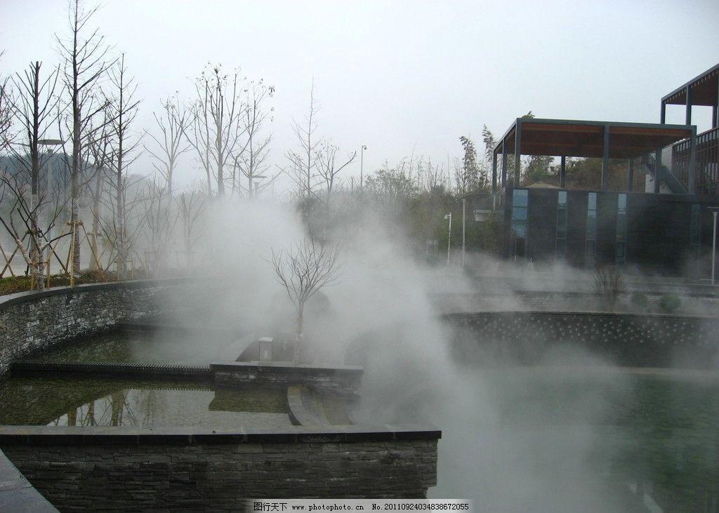 雾森 雾气 小树 森林 自然风景 自然景观 摄影 180dpi jpg