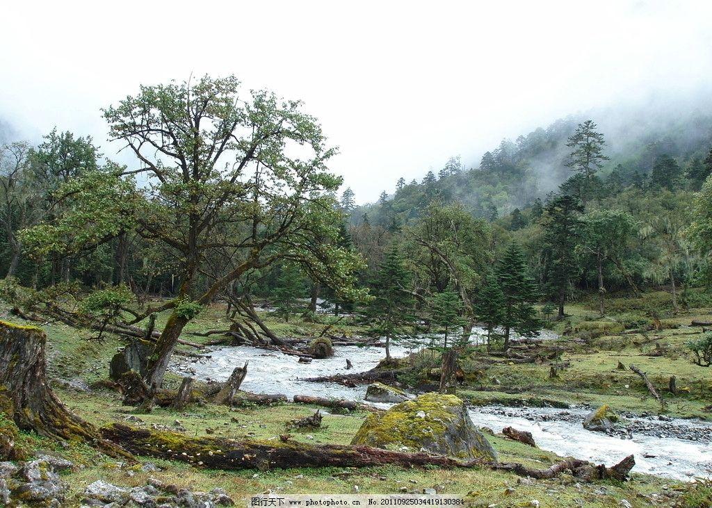 原始森林 绿树 山雾 绿山 流水 山水风景 自然景观 摄影 314dpi jpg