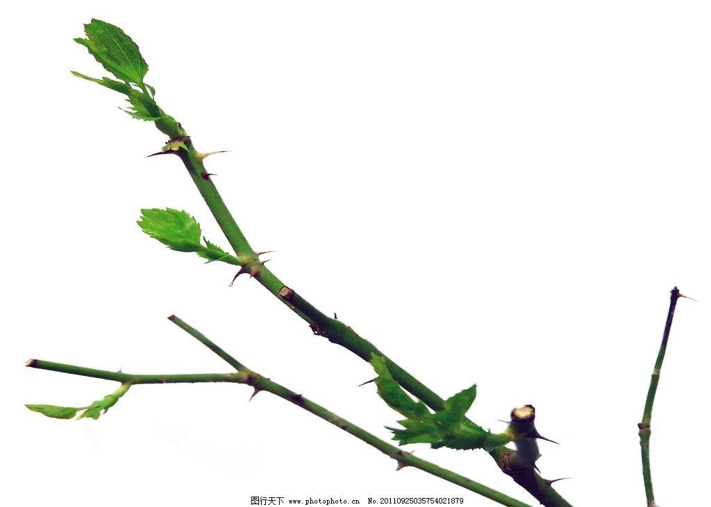 枝叶图片图片