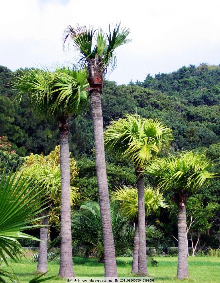植物 棕榈 树木树叶 生物世界 摄影 180dpi jpg
