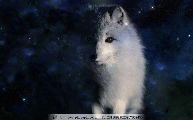 白狐星座免费下载 风景 狐狸 桌面背景 桌面背景图片 狐狸 风景 桌面