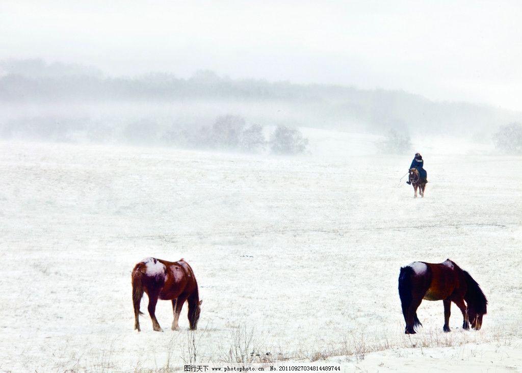 雪地上的马 吃草 风景摄影 美丽的风景 自然风景 自然景观 摄影 300