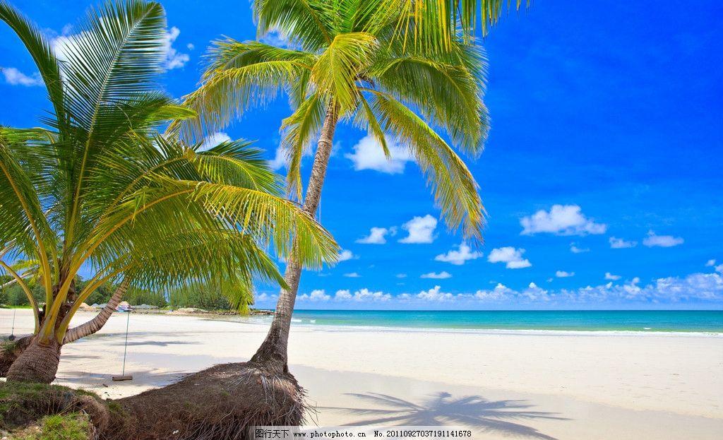 海滩椰树 海滩 沙滩 椰树 椰子树 海平线 碧海蓝天 旅游度假 娱乐休