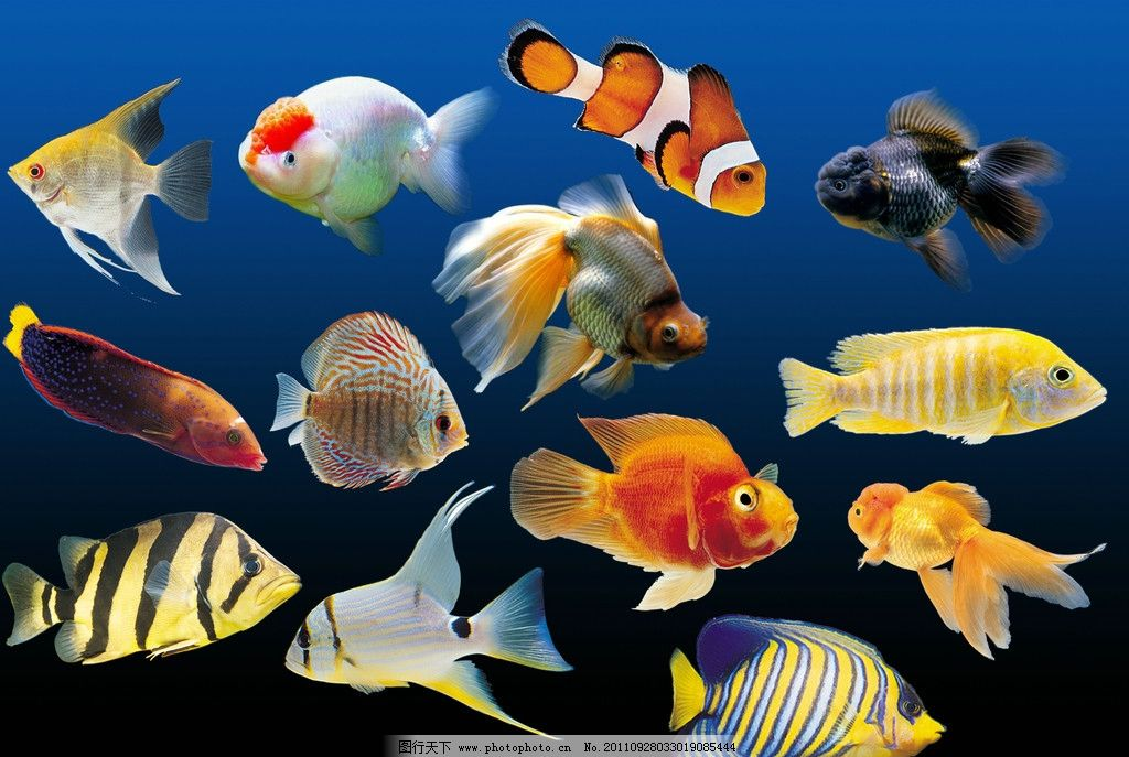 海底有什么动物图片