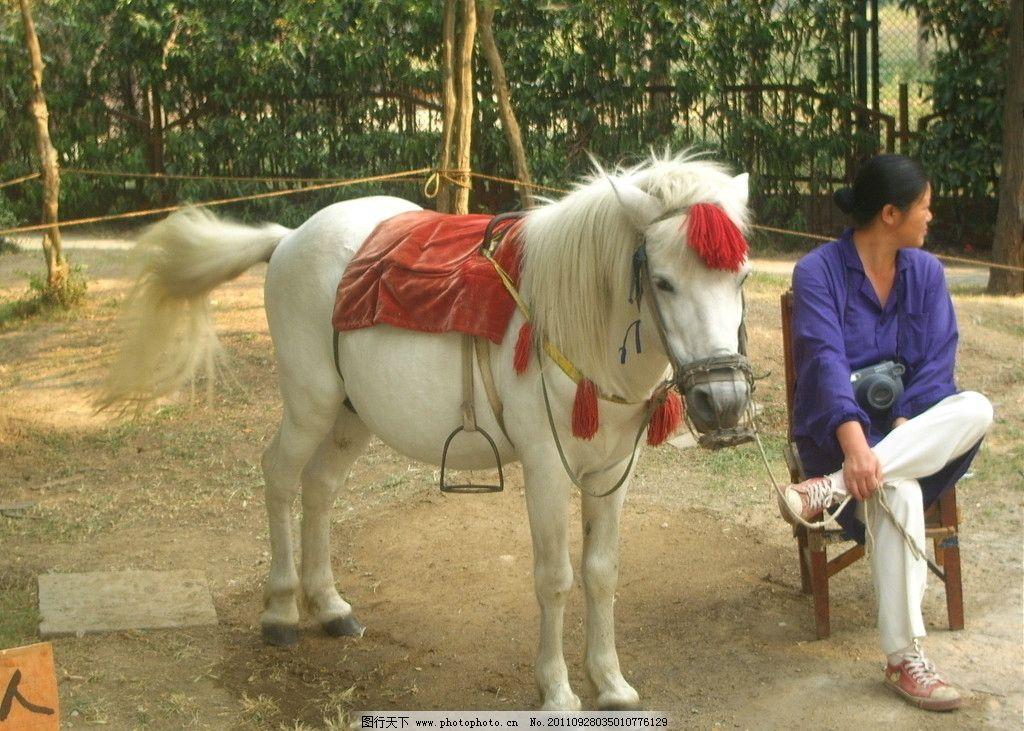 动物园白马图片