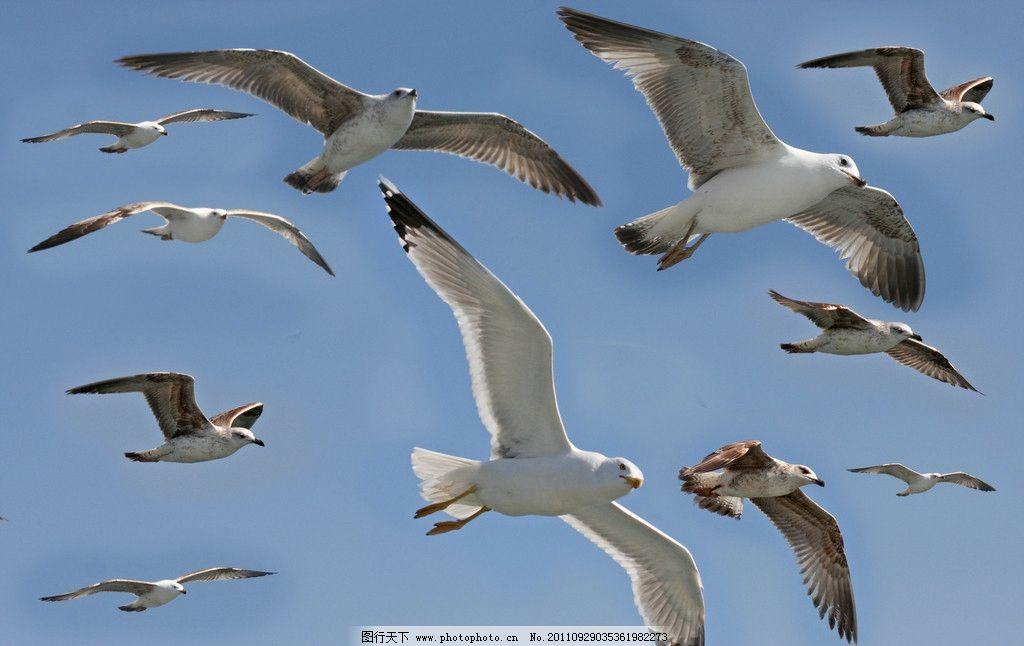 成群的海鸟图片