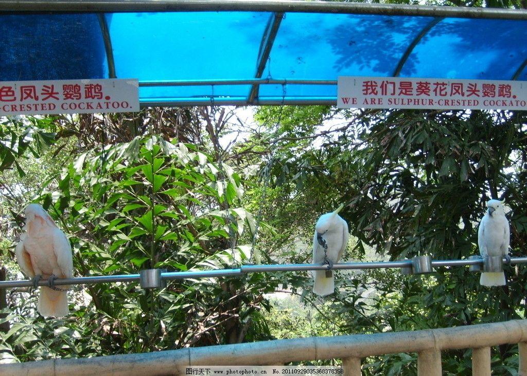 动物园的图片